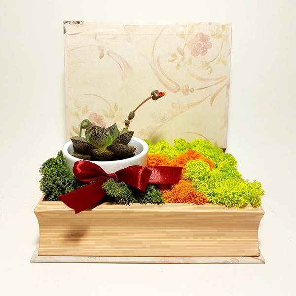 aranjament in carte cu licheni si suculente